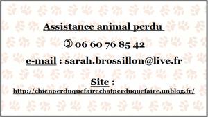 Recherche animaux perdus, assistance 7 jours/7